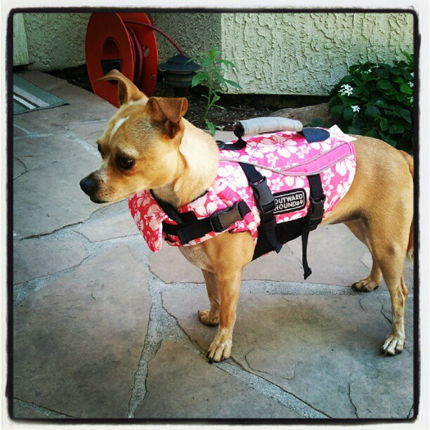 Zoey girl going swimming