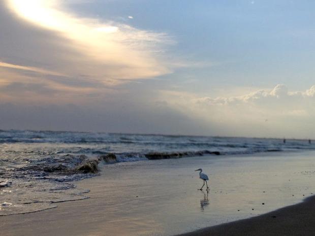 http://sealaura.blogspot.com/