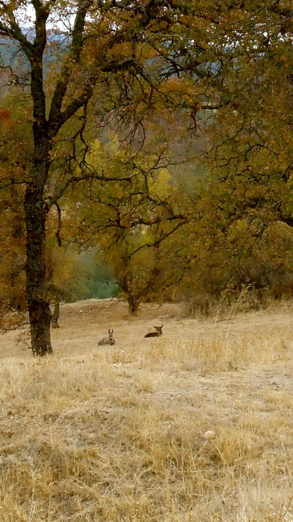 Deer In The Fall Foliage