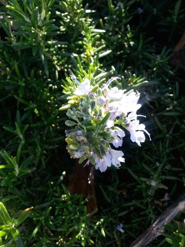 Pop Of Spring Blooms