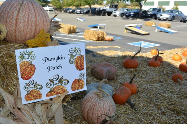 A Pick Your Own Pumpkin Patch